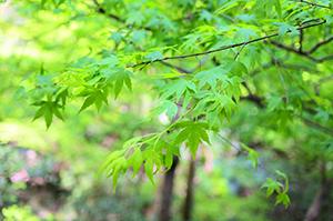 新緑カーニバル(龍安寺公園)での「ゆずローション de 首肩頭ケア」(5月27日)